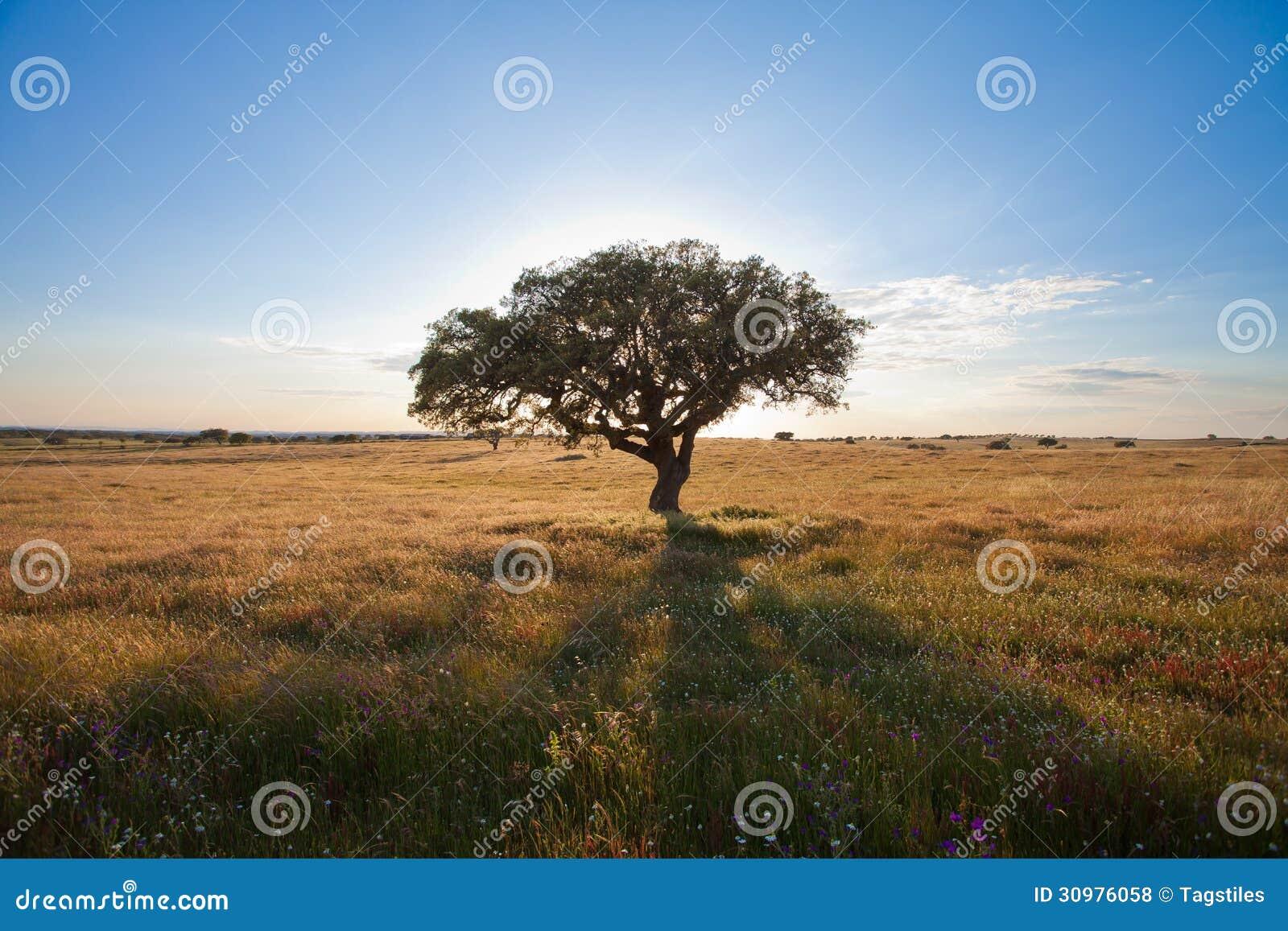 Download Portugal - Natur stockfoto. Bild von innen, schatten - 30976058