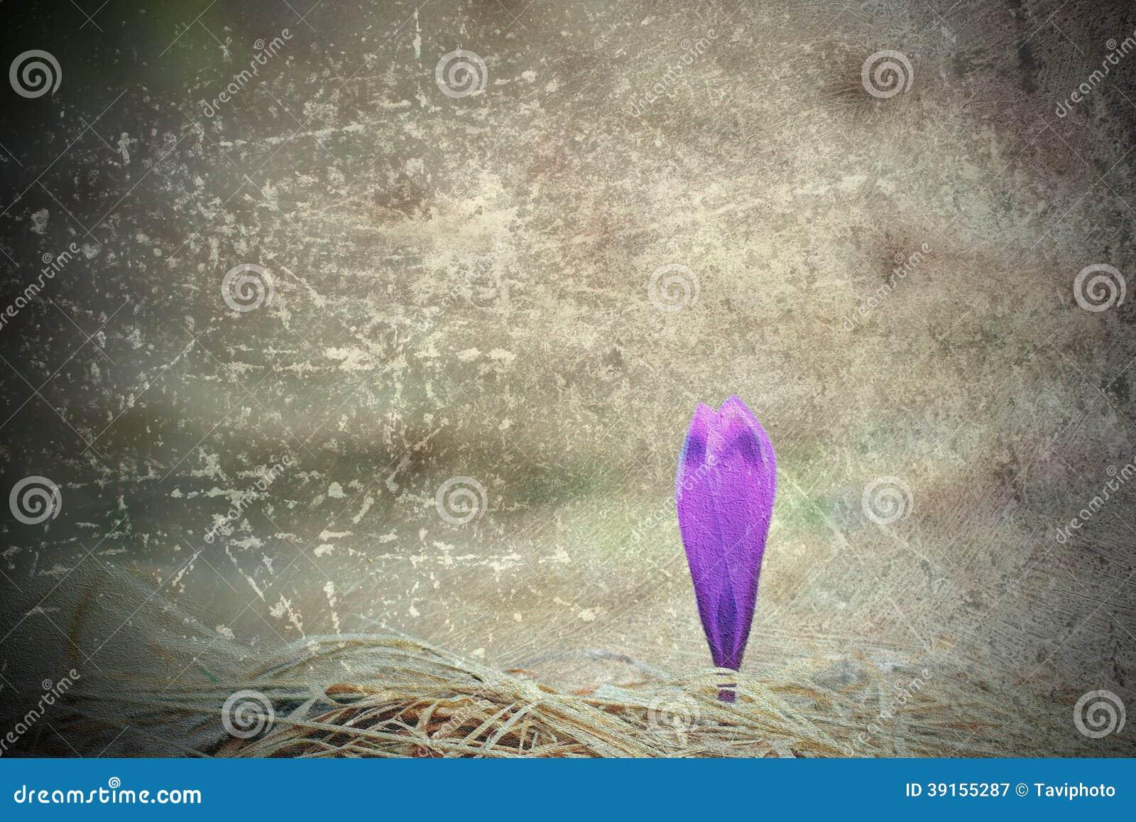 Porysowany abstrakcjonistyczny widok purpurowy szafran