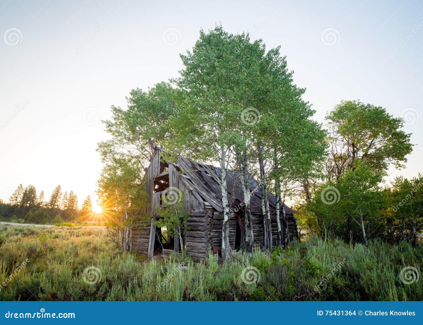 Porzuca beli kabinę która był porosła z drzewami