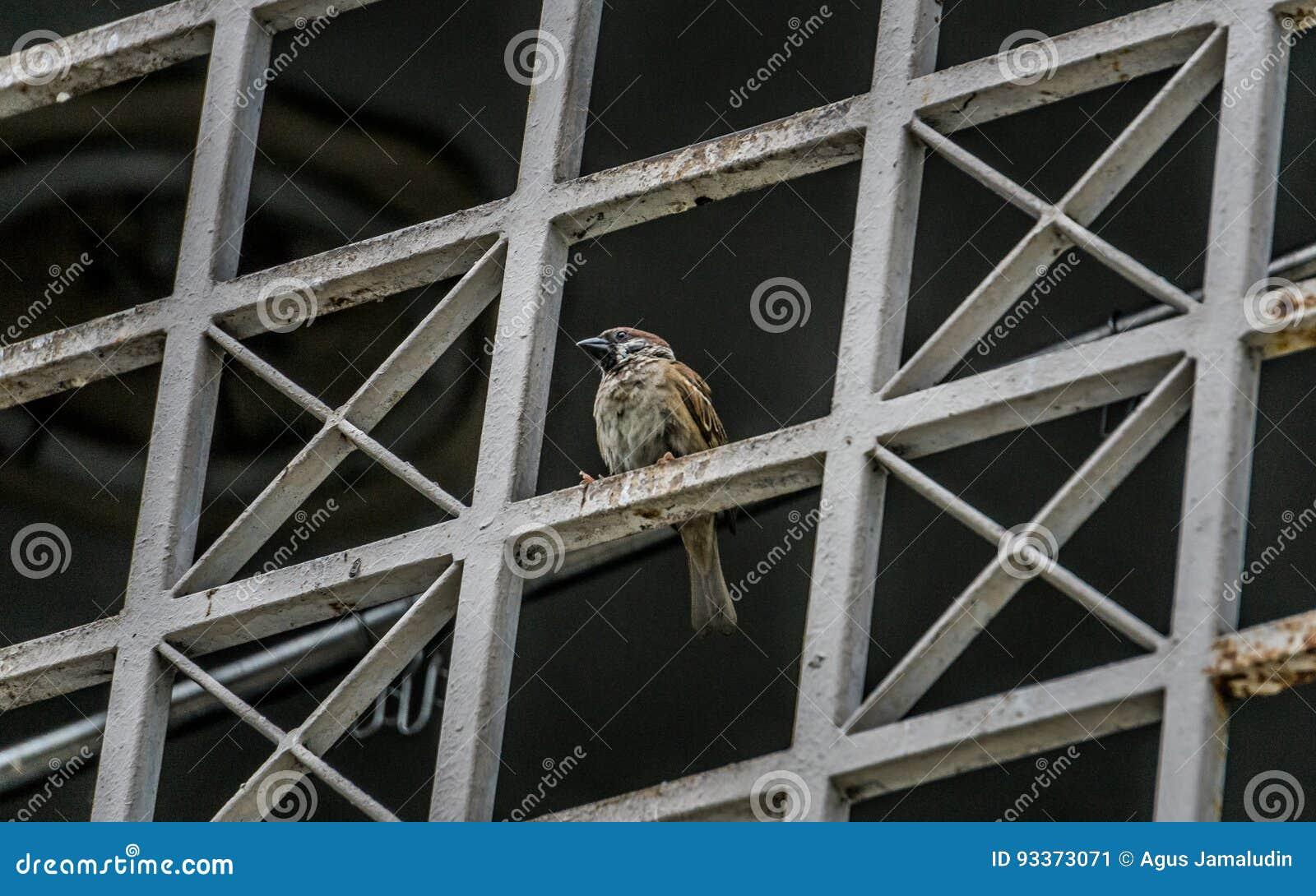 Posa dell uccello