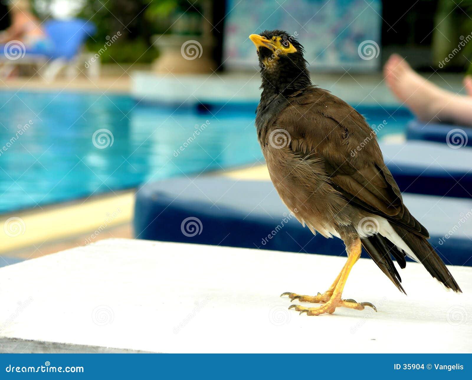Pose d oiseau