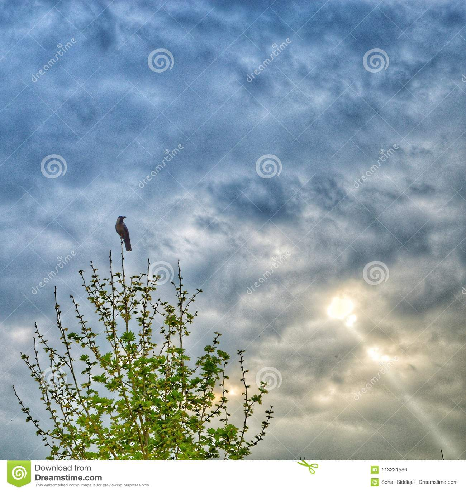 Poser wrona