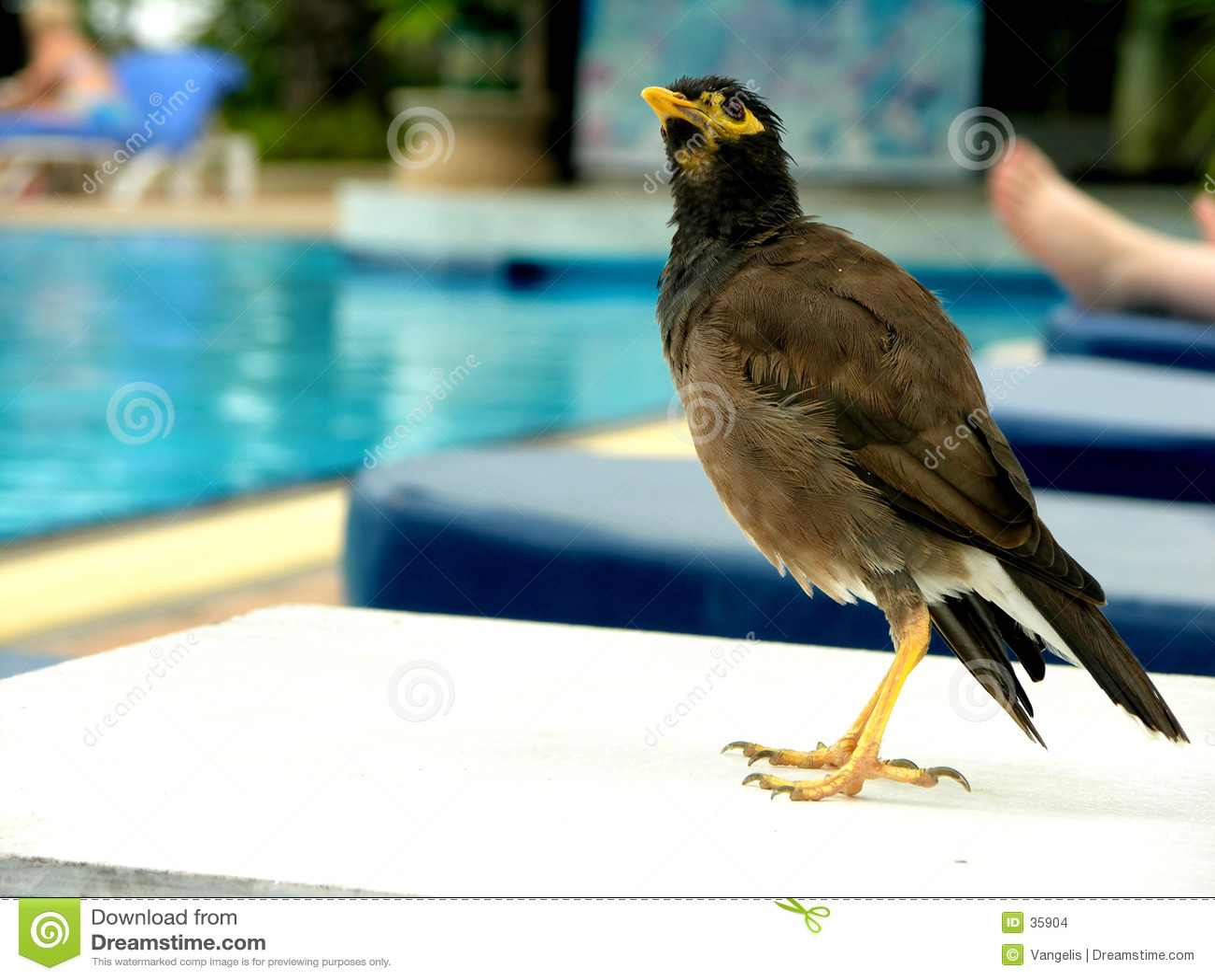 Posera för fågel