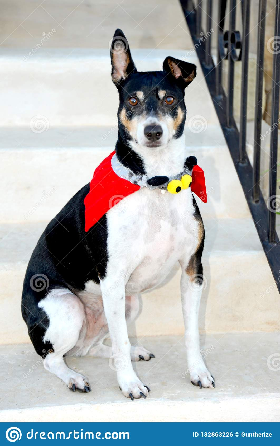 Poses do cão vestidas acima em um traje de Dia das Bruxas