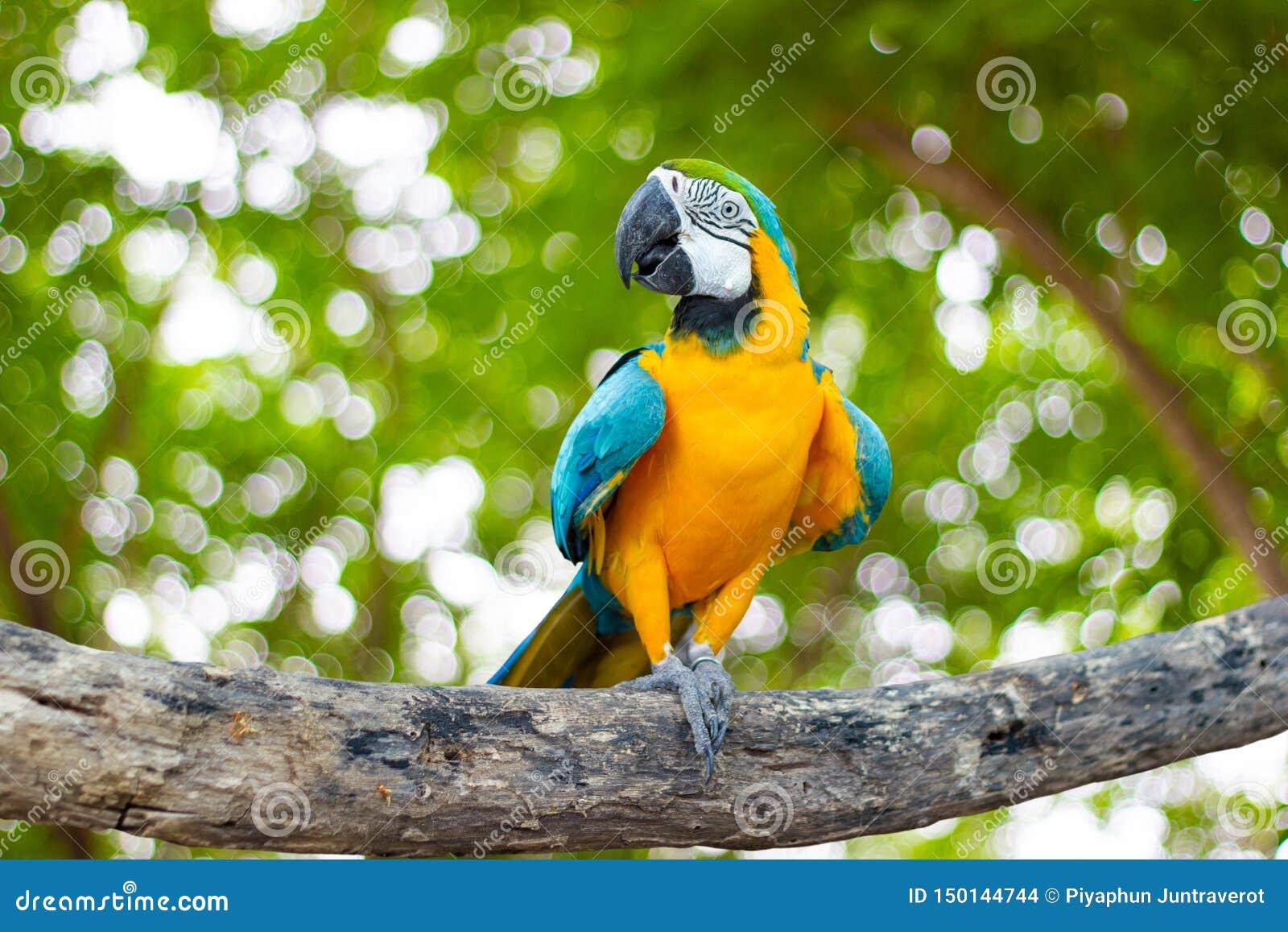 Posição azul e amarela do pássaro da arara em ramos