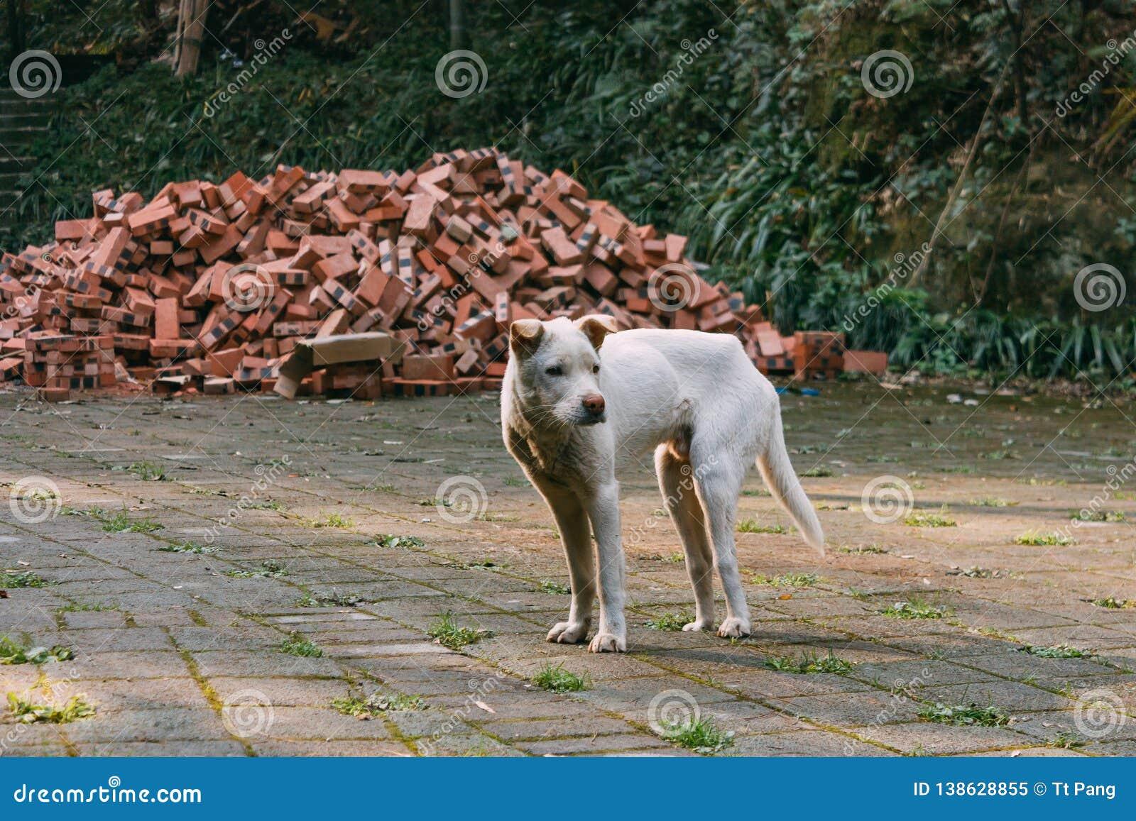 Posição branca triste do cão disperso em uma estrada na frente dos tijolos e da floresta