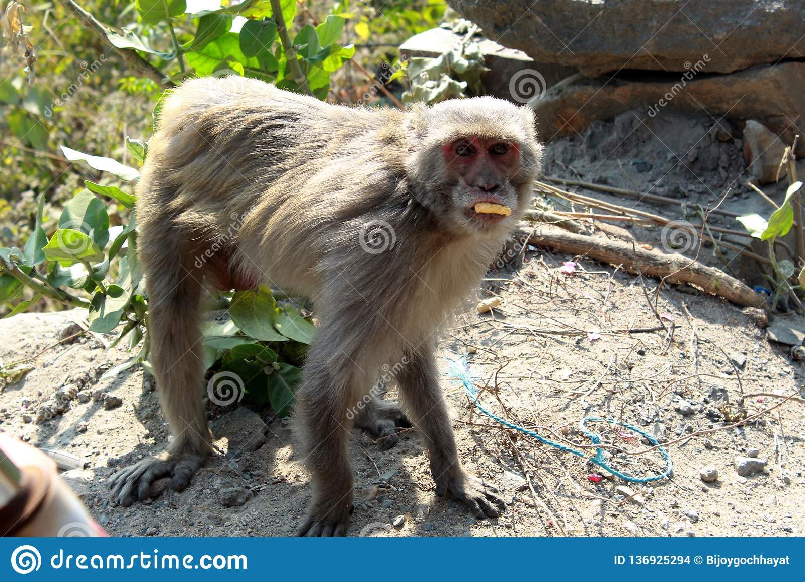 Posição do macaco ou dos simians