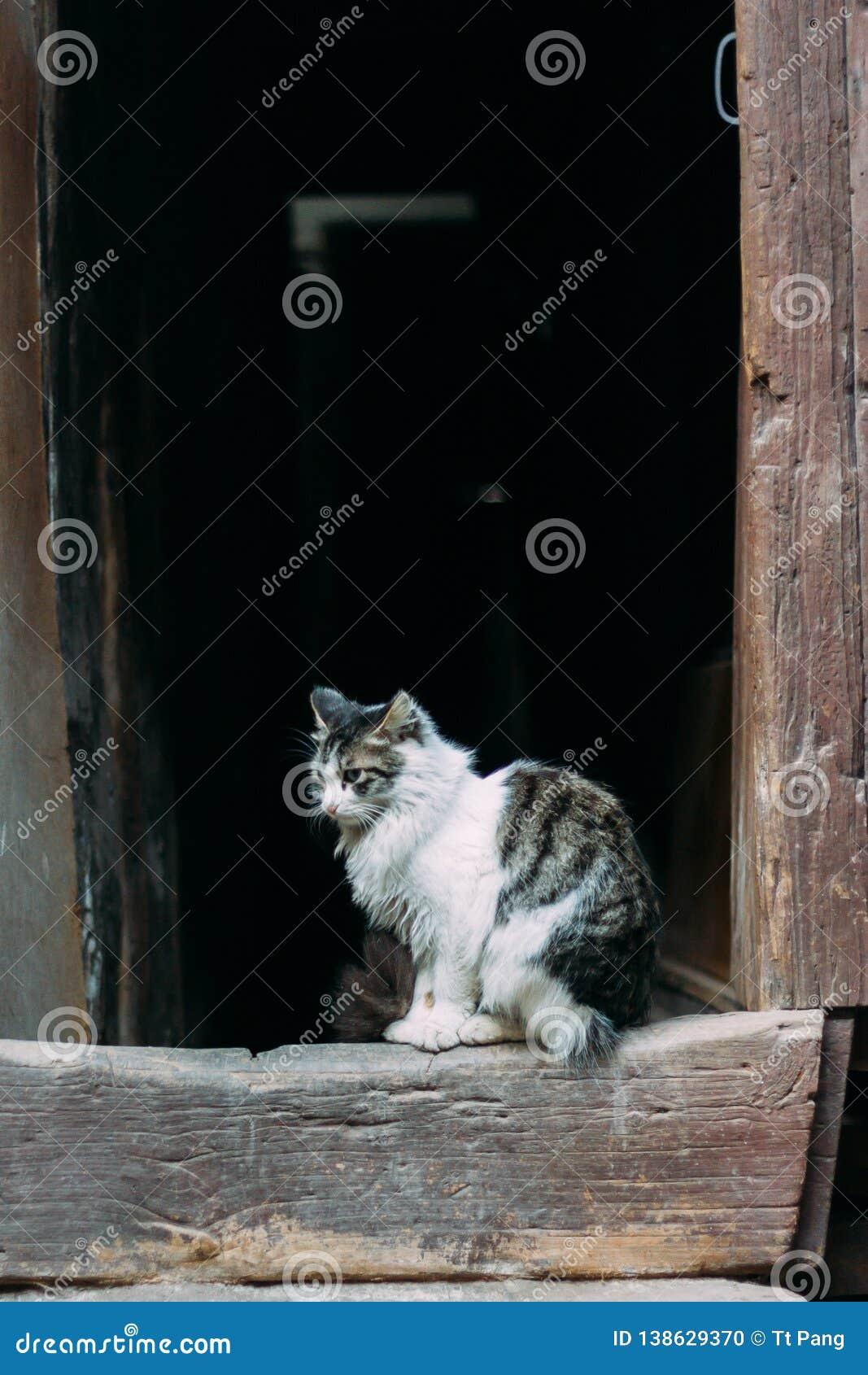 Posição preto e branco triste do gato na frente da porta chinês-denominada