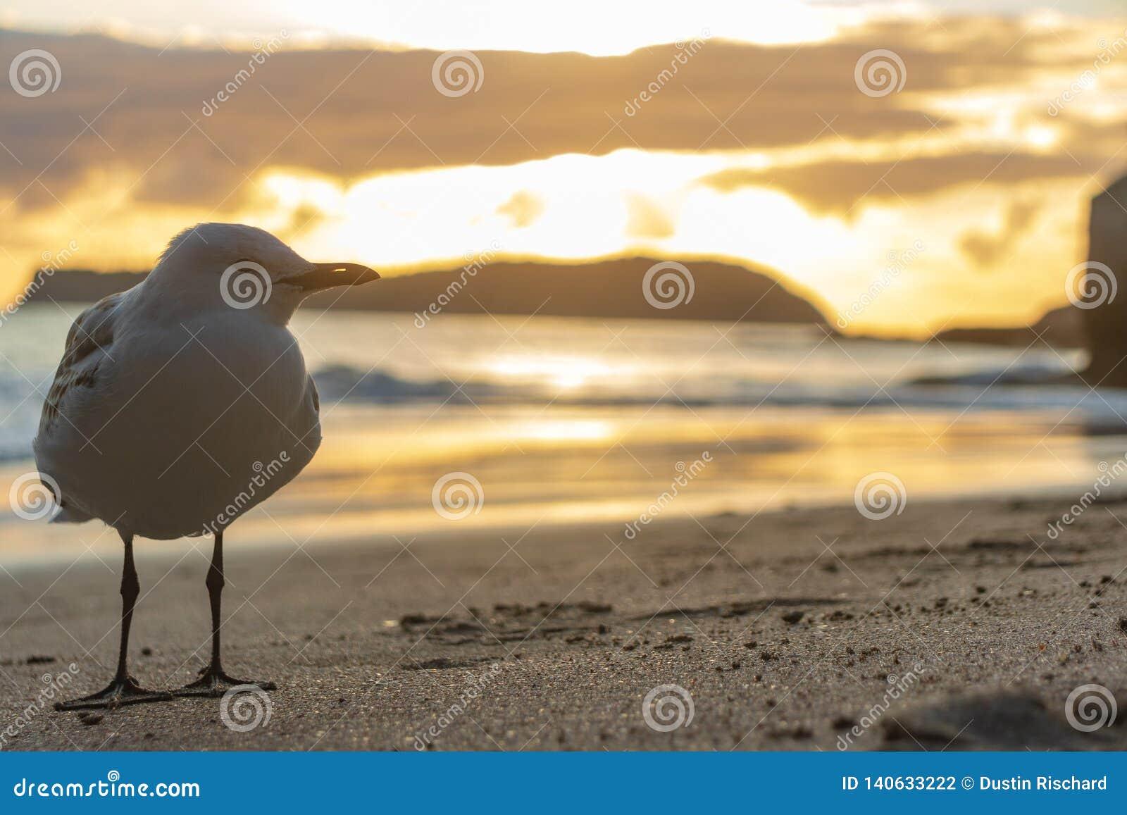 Position de plan rapproché de Seagul devant la roche de sourire de sphinx à la plage de crique de cathédrale dans le hahei, corom