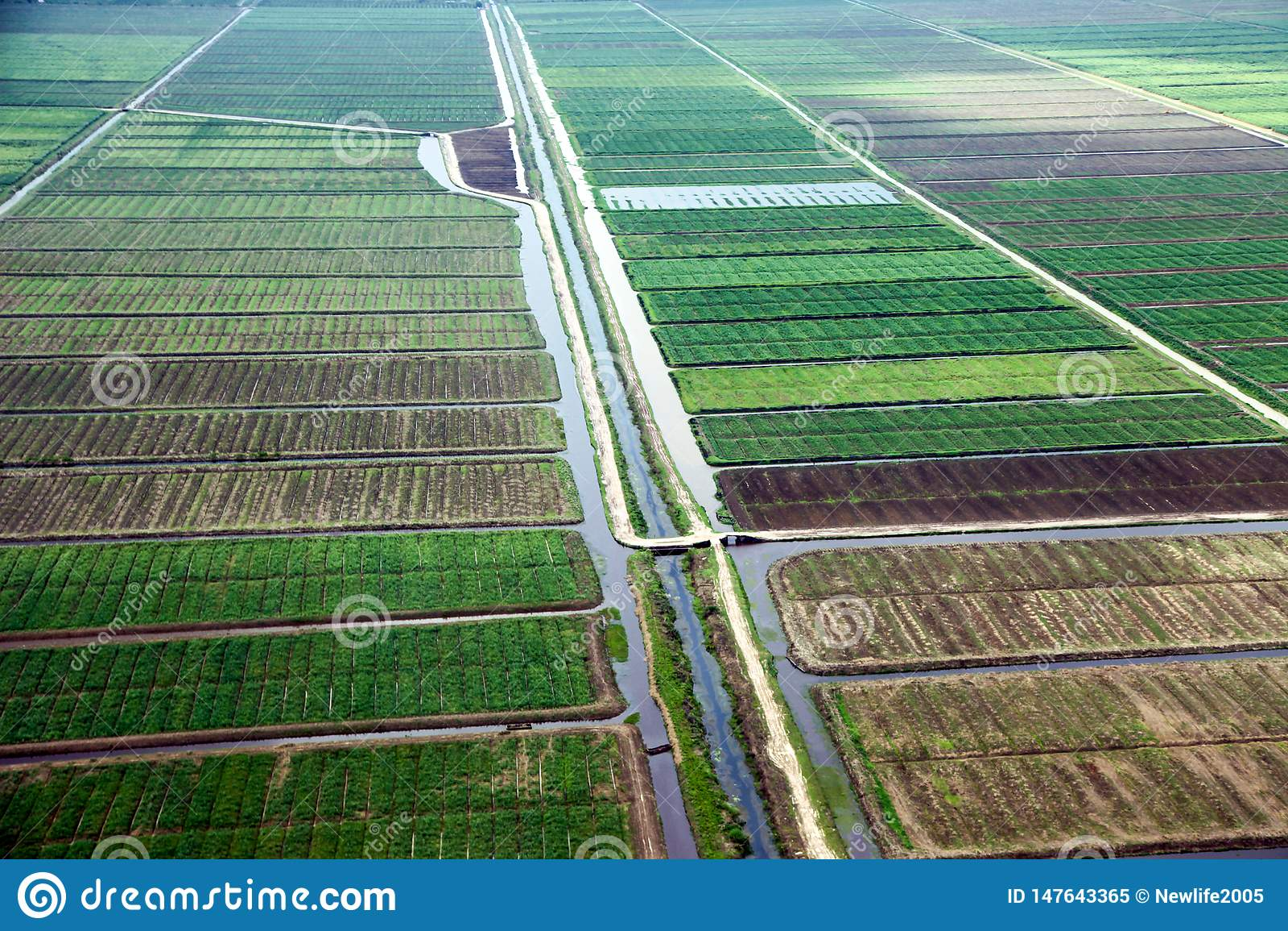 Position de primevère farineuse des champs avec des voies d eau, adoptée de l avion