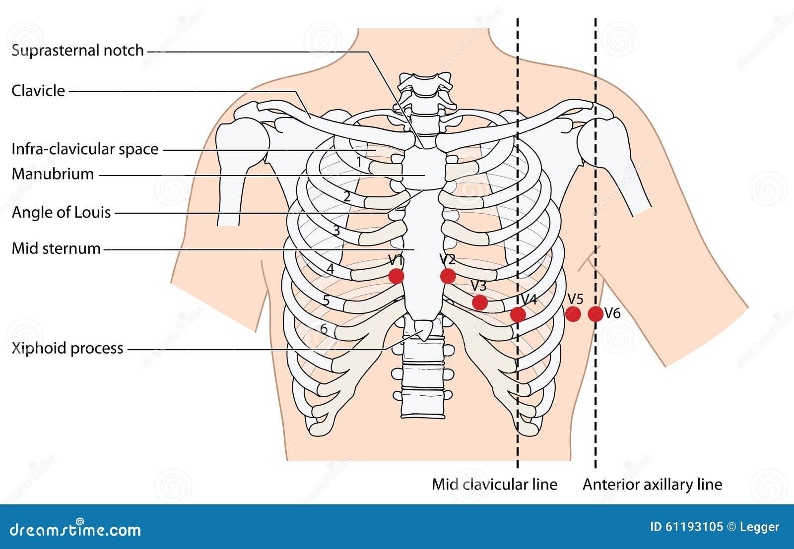 Position of ekg leads stock vector illustration of drawing 61193105 position of ekg leads pooptronica Gallery