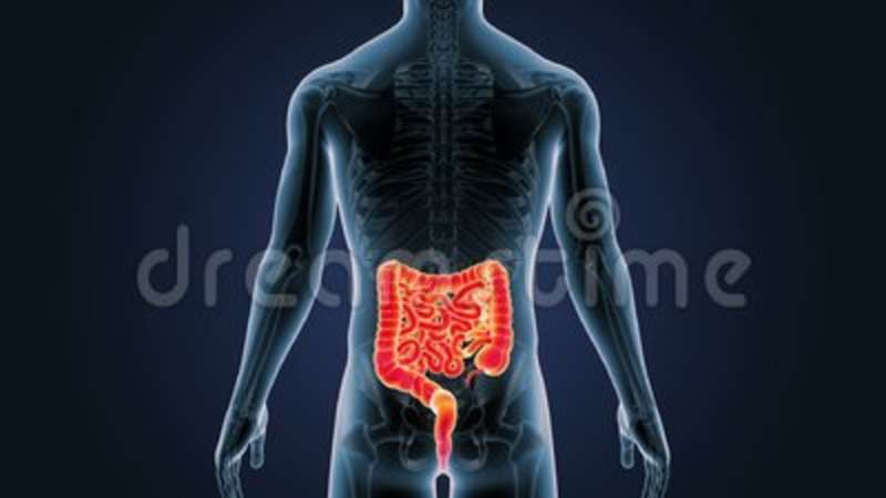 Position Of Intestine And Skeleton In Human Body Stock Footage ...
