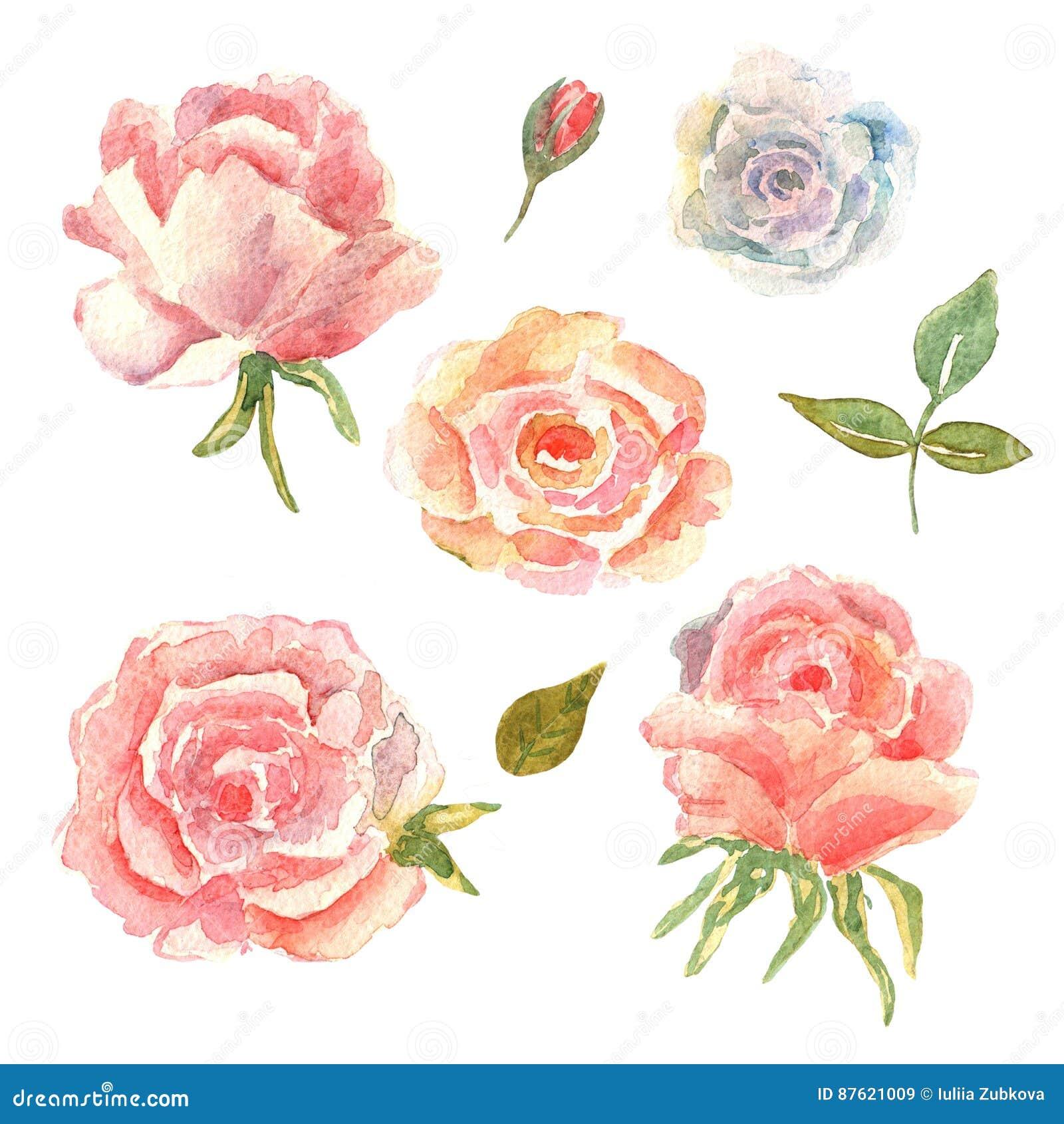 Positionnement Floral Collection Avec Des Fleurs Aquarelle De