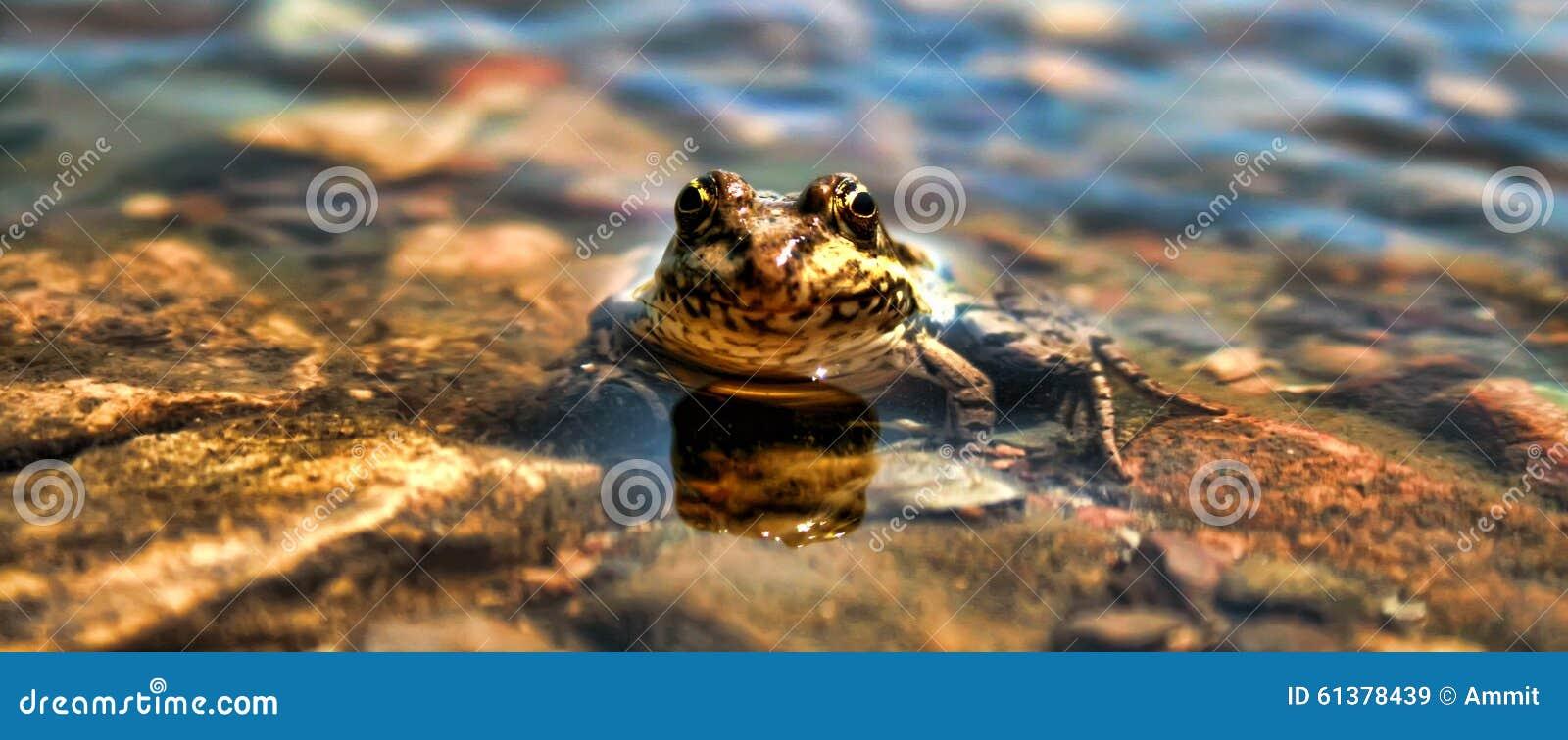 Pospolita żaba Zanurzający Niski kąt