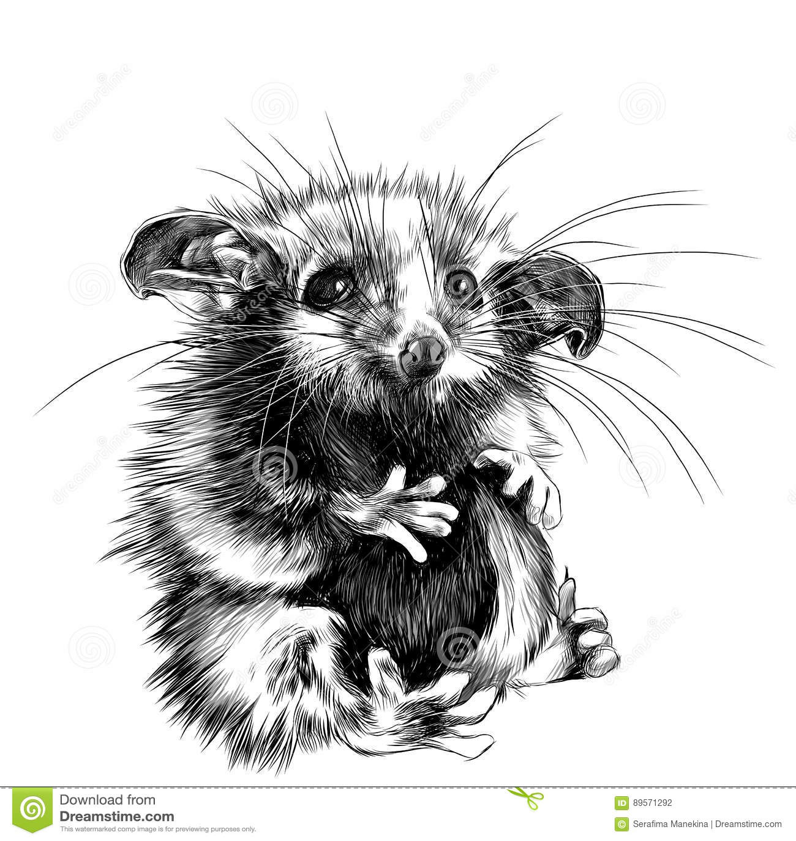 Possum sketch vector stock vector. Illustration of black ...