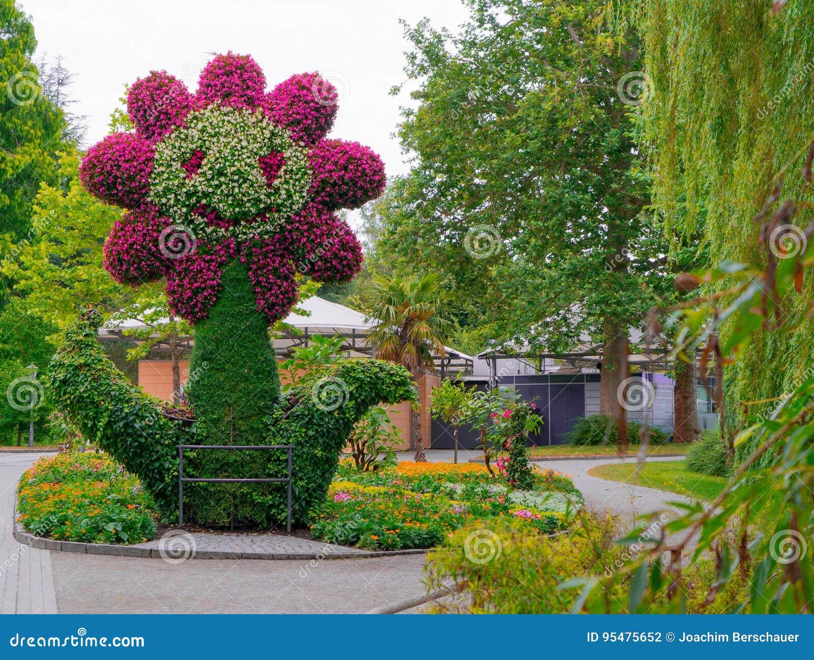 Postać kwiat zrobi kwiaty na wyspie Mainau w Niemcy