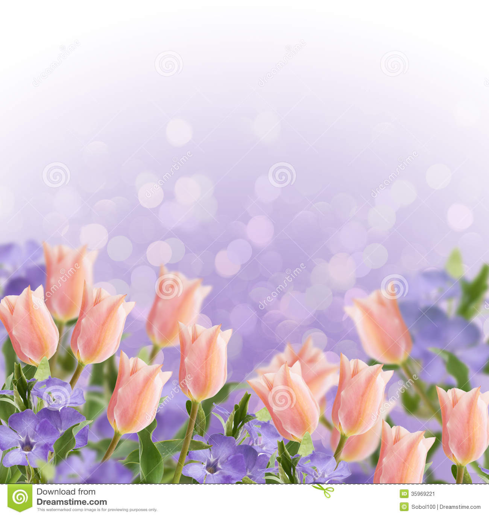 Postal con los tulipanes de las flores frescas y bígaro y pl vacío