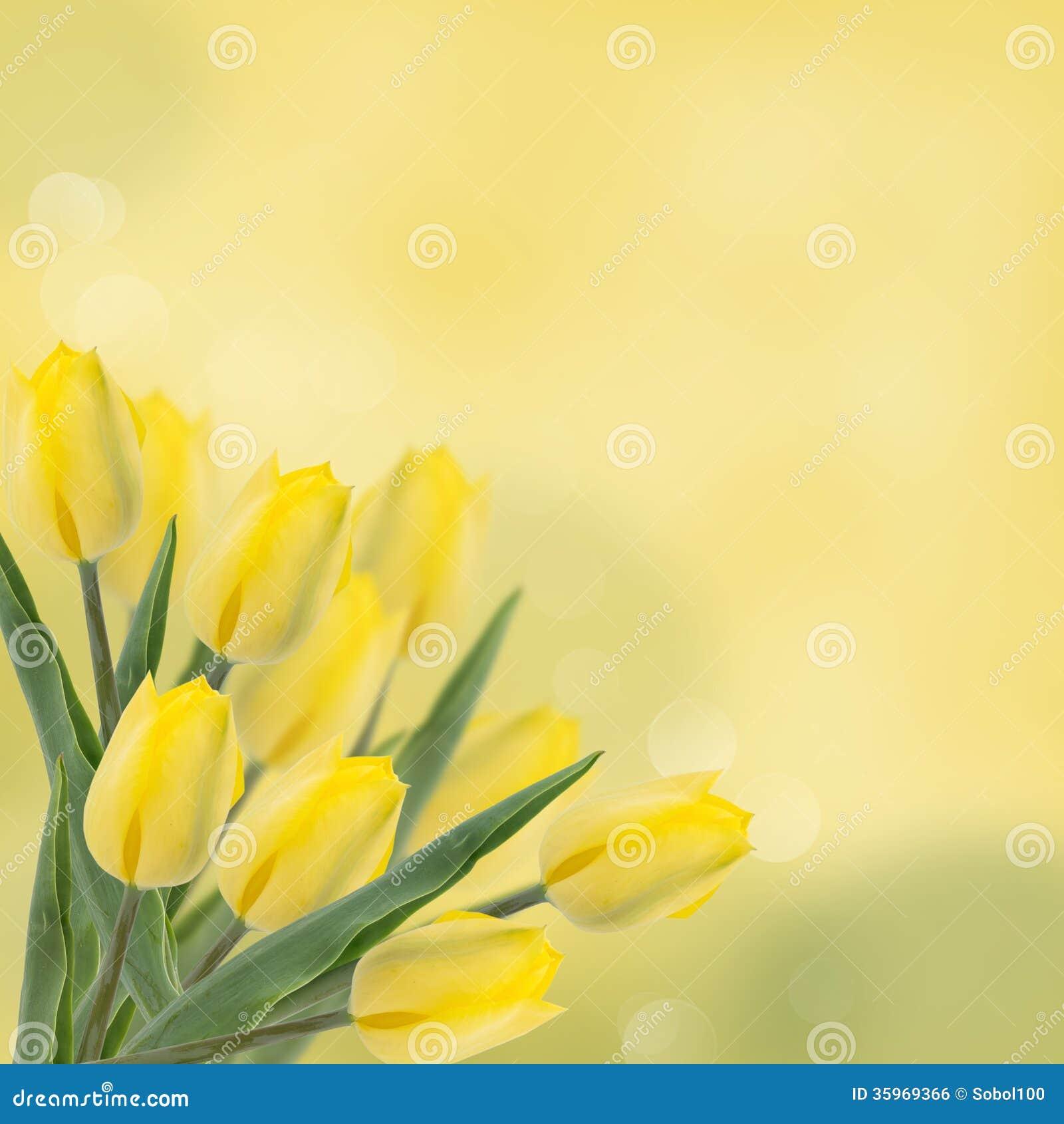 Postal con los tulipanes de las flores frescas y lugar vacío para su te