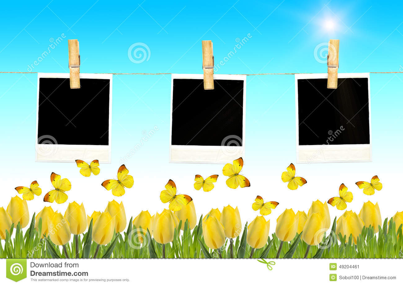 postcard with fresh tulips and grass blank photo frames on clot