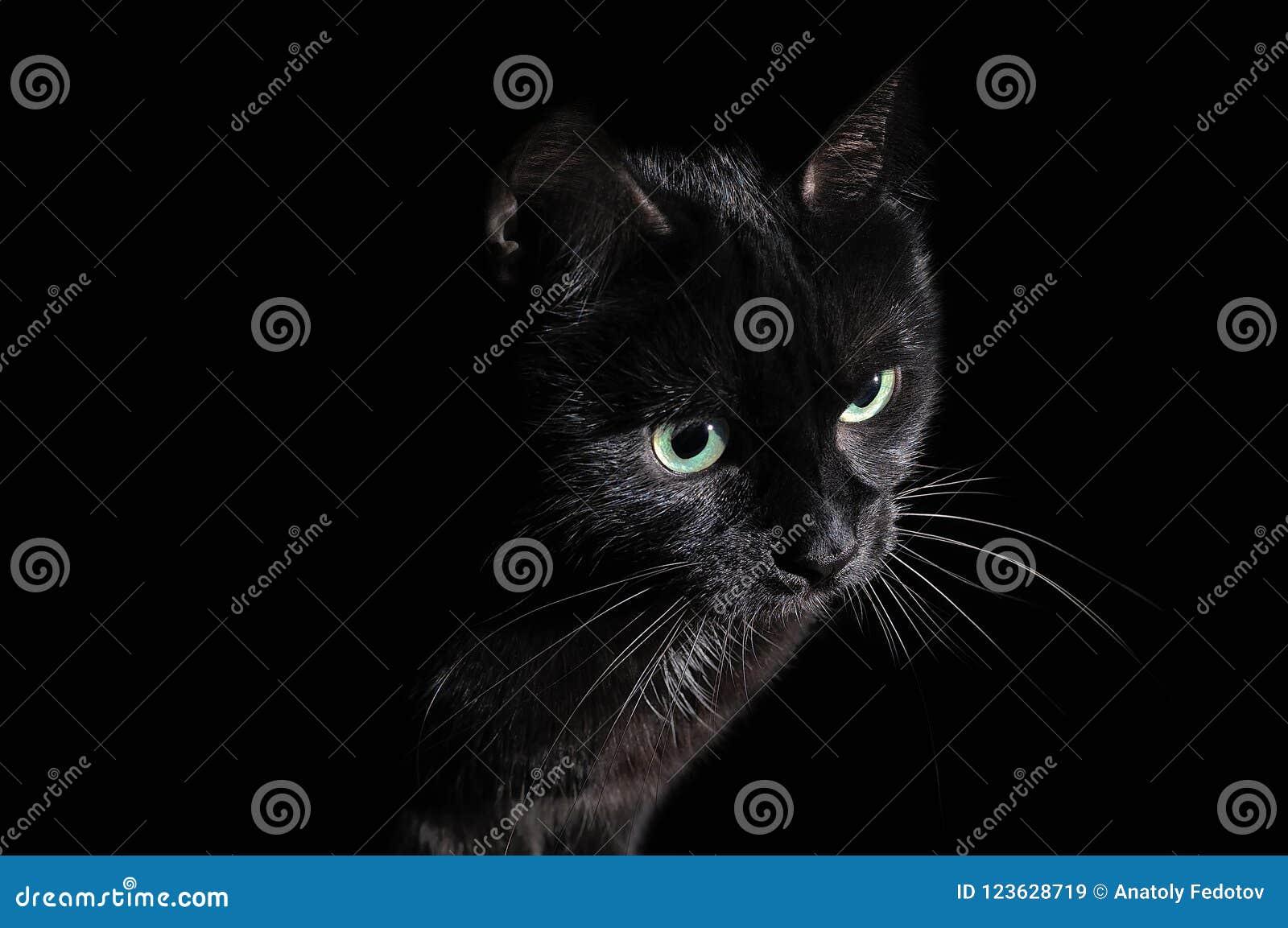 Postcard for Halloween: portrait of a black cat