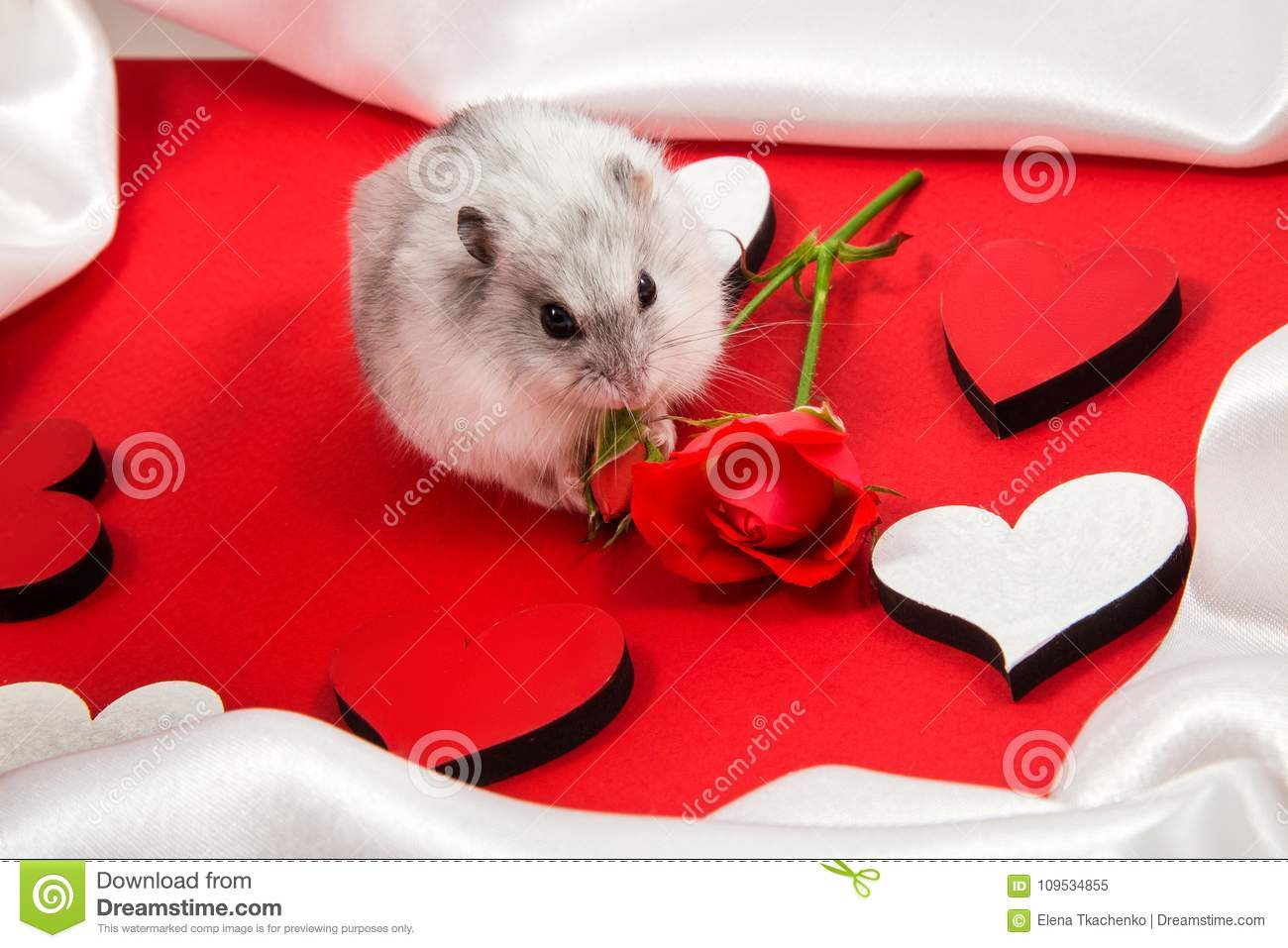 Postcard To The Day Of The Holy Valentine With A Hamster Giving A