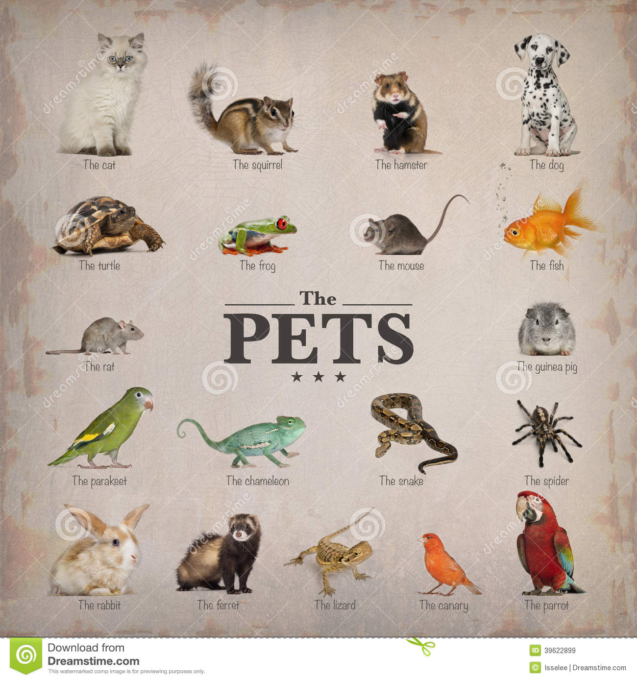 Poster Of Pets In English Stock Photo - Image: 39622899