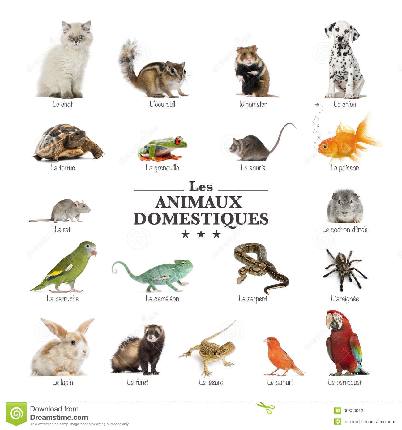 French Bedroom Set Poster Of Pets In French Stock Photo Image 39623013