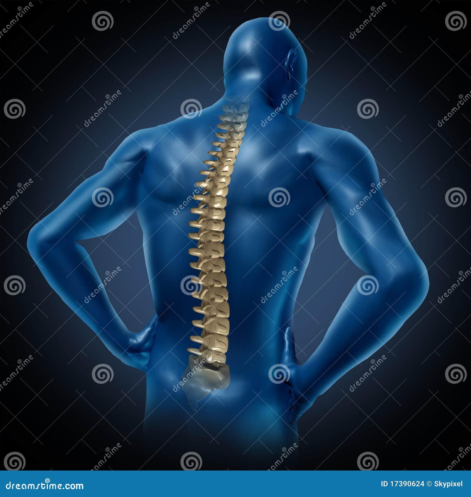 Postura posterior de la espina dorsal del ser humano