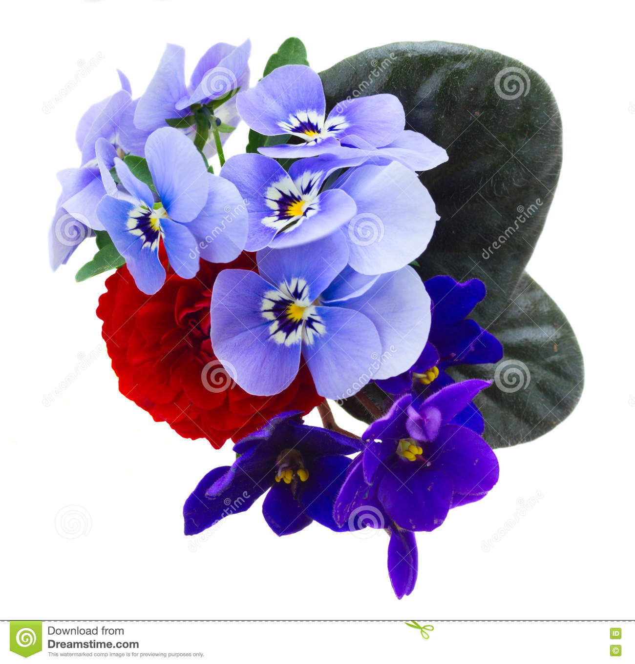 Image result for A Posy of Violets