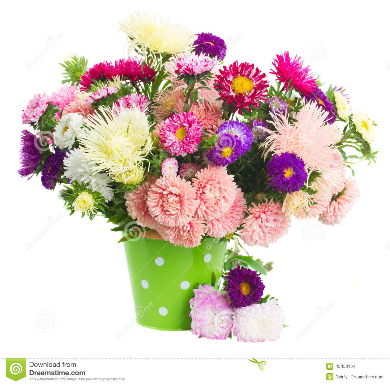 Pot Of Aster Flowers Stock Photo Image Of Bunch Border 45453104