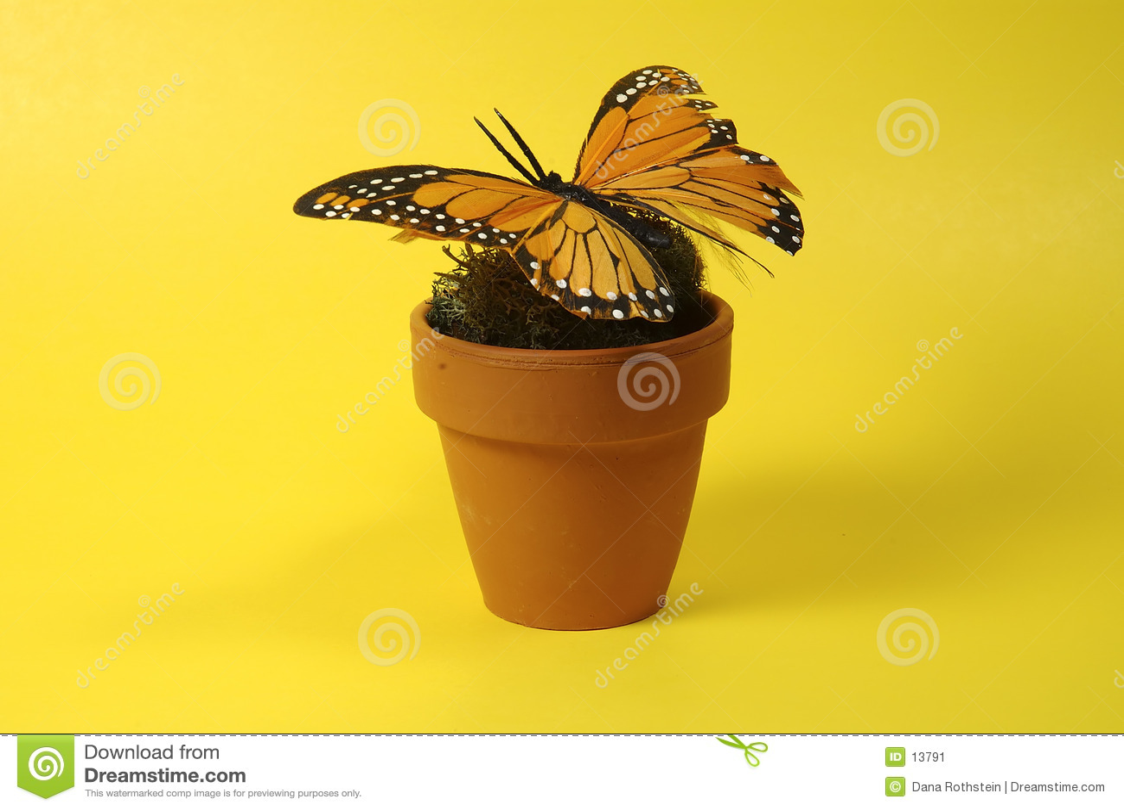 POT con la farfalla