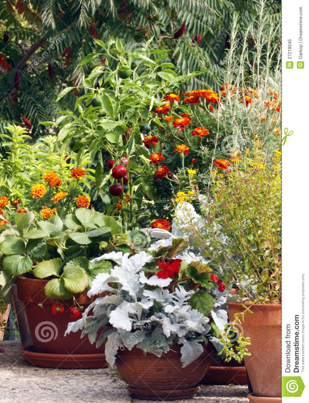 Pot and container gardening on the terrace or balc stock for Terrace plants