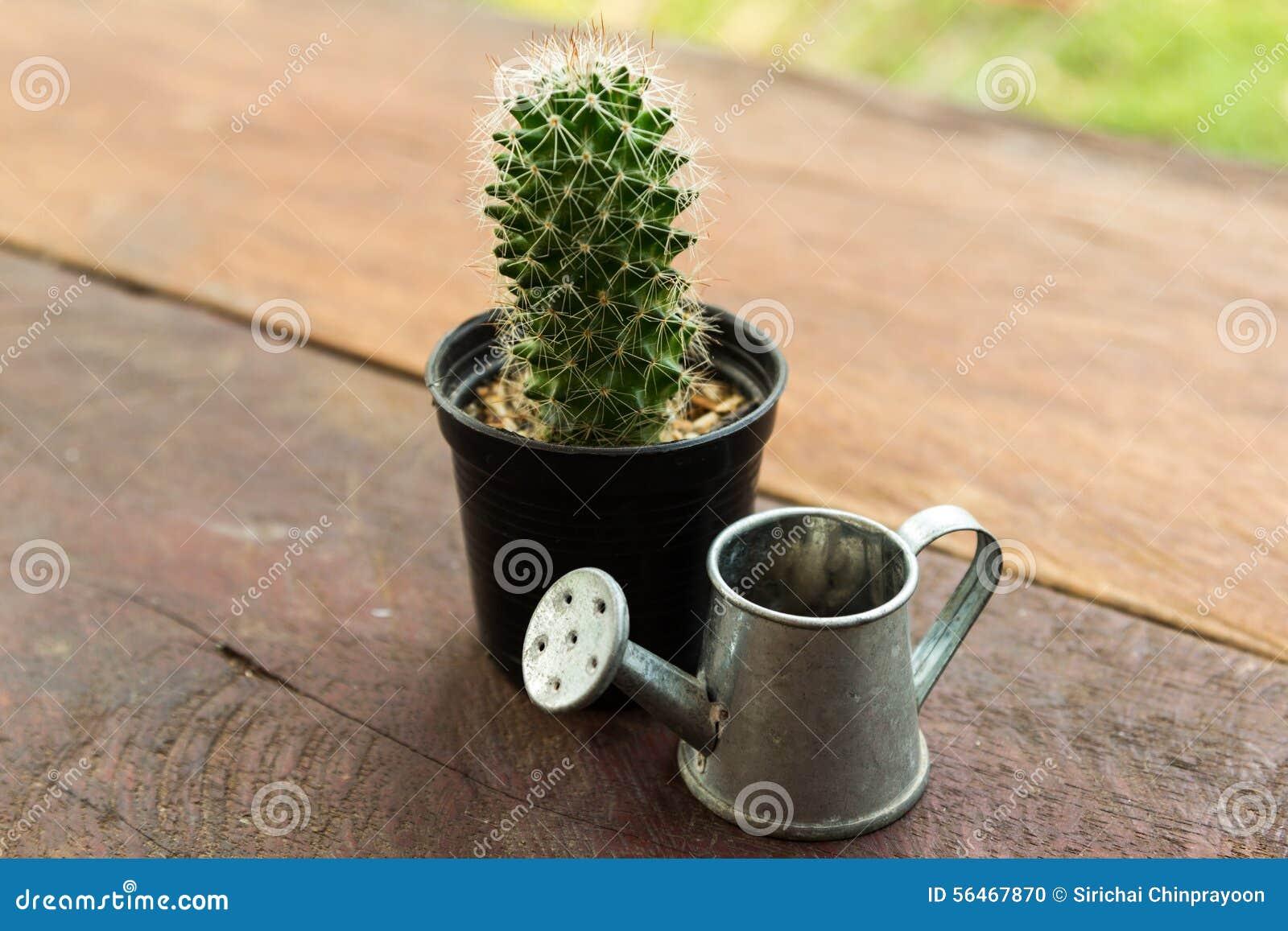 arrosage jeune cactus. Black Bedroom Furniture Sets. Home Design Ideas