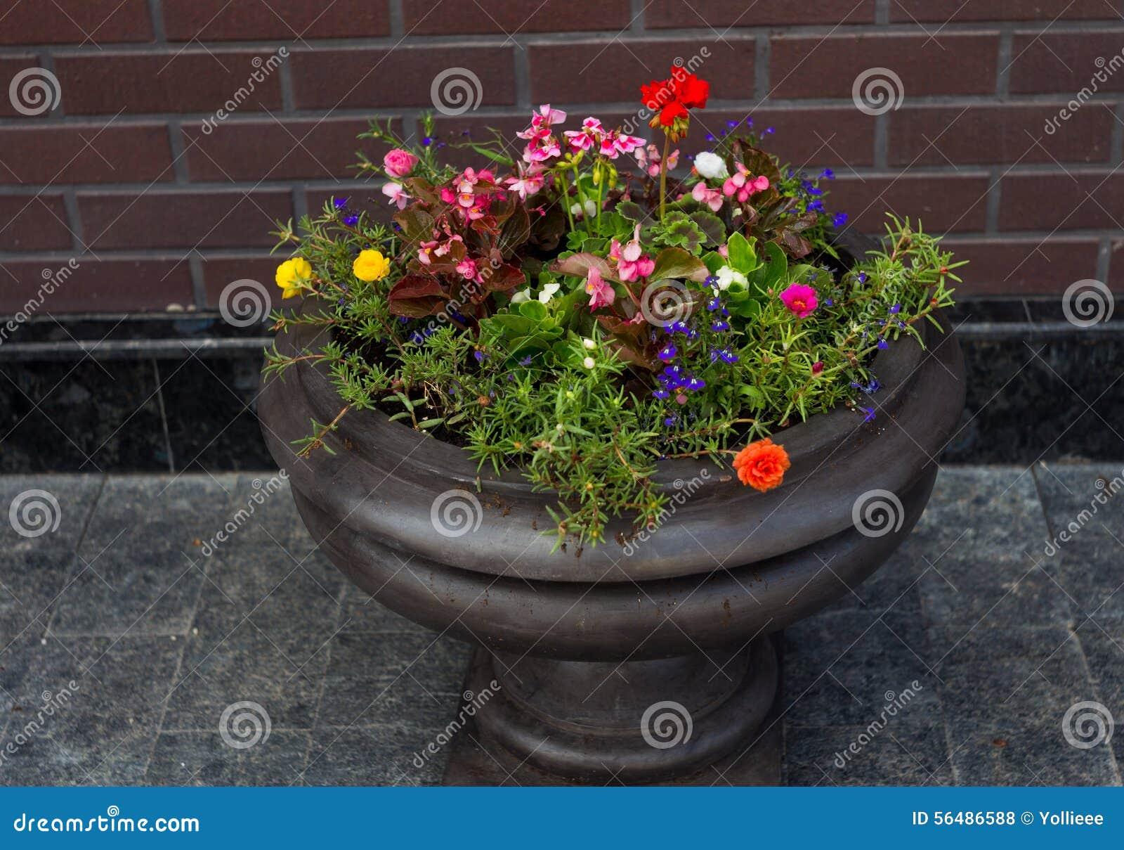 Pot de fleur de rue