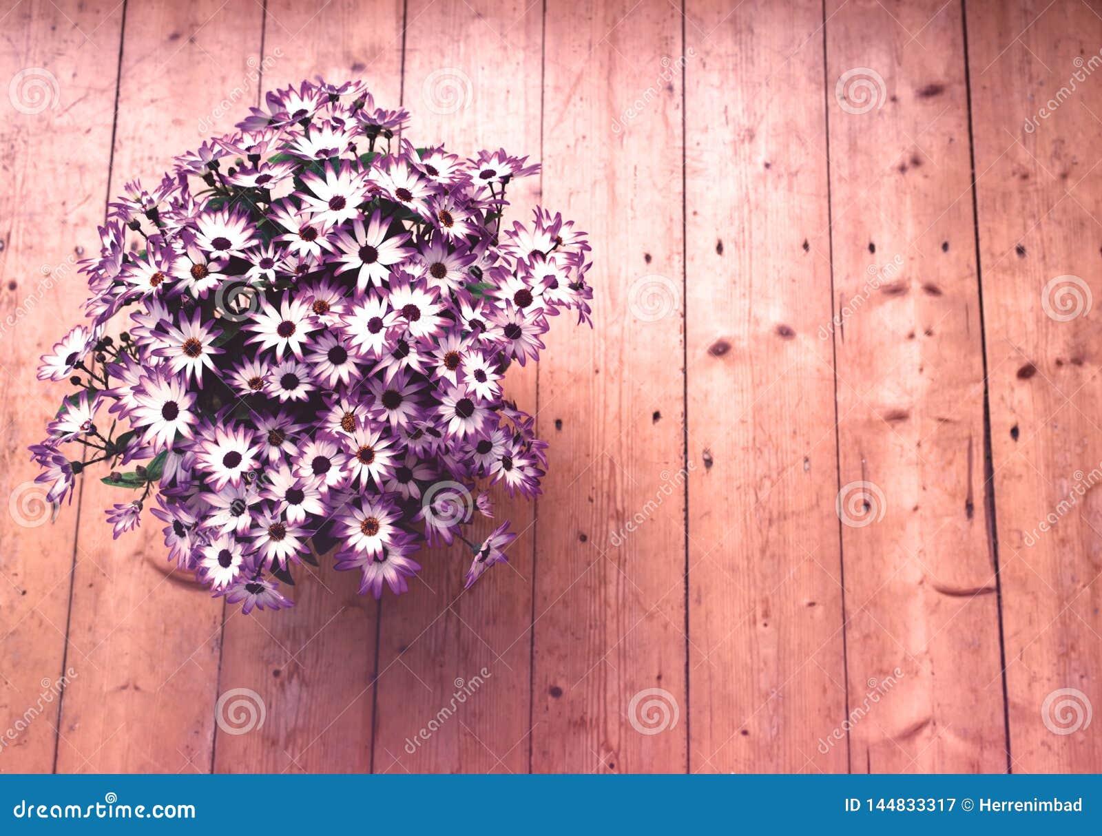 Pot de fleurs sur le plancher en bois