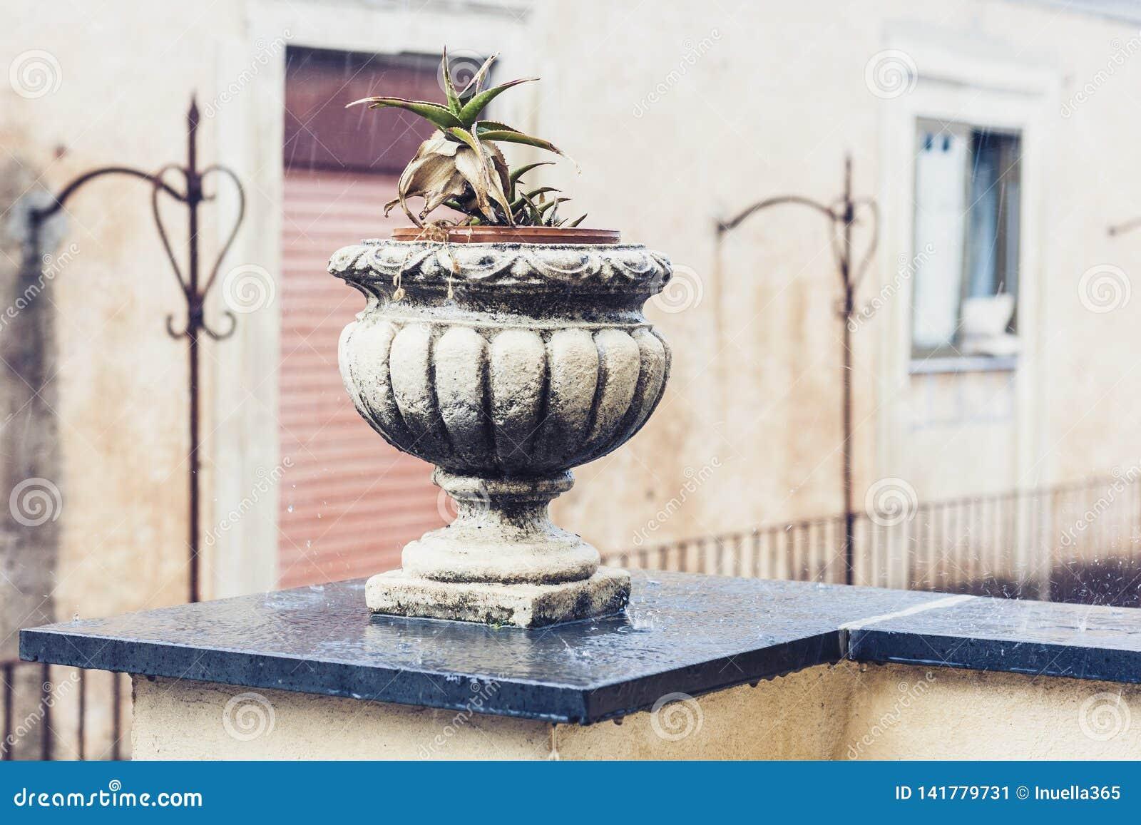 Pot en pierre décoratif pour des usines sur la terrasse d un bâtiment historique à Catane, Sicile, Italie, jour pluvieux