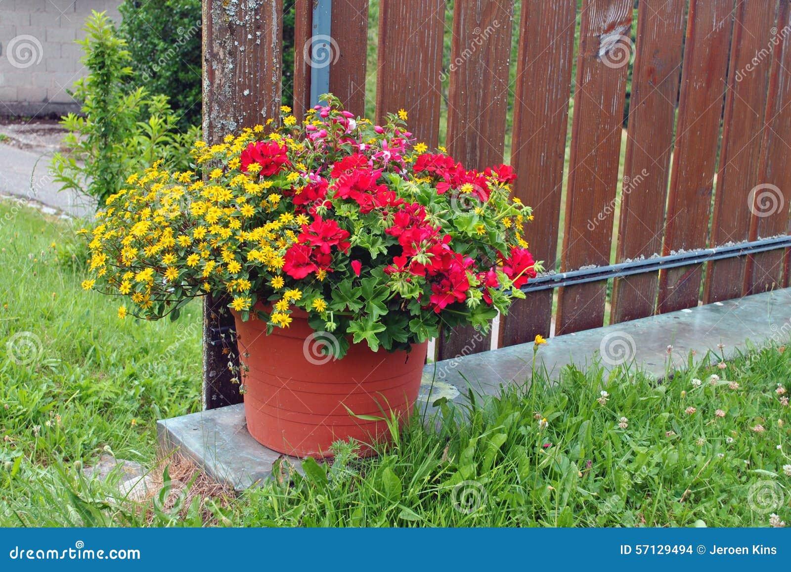 Pot With Flowers Geranium Sanvitalia And Fuchsia Stock Photo