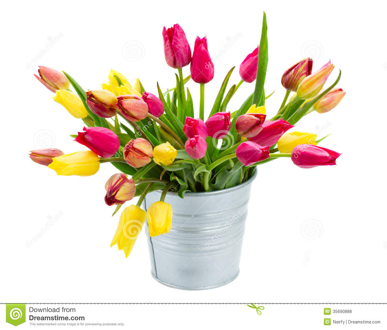 Pot With Pink And Yellow Tulips Flowers Stock Photo