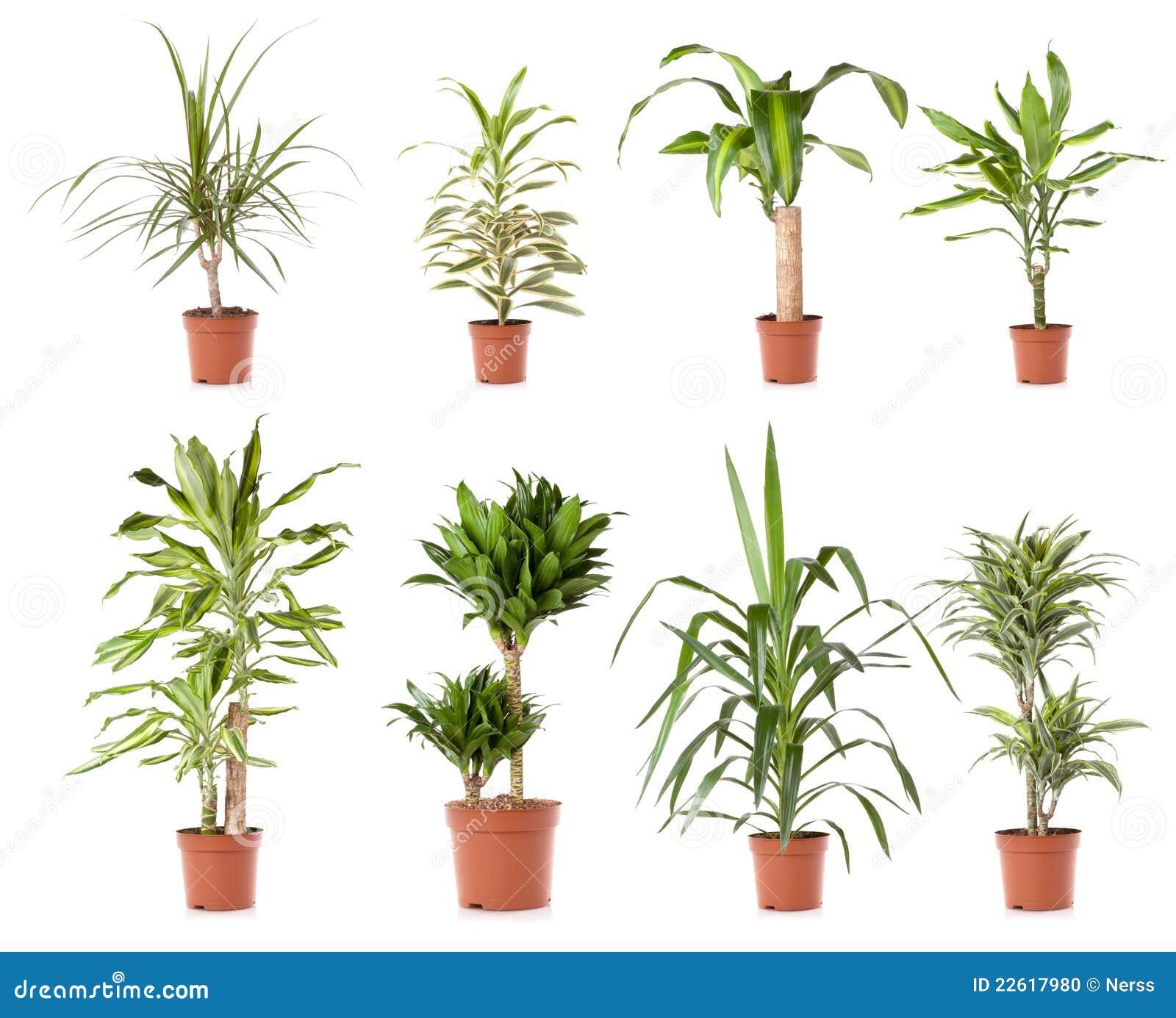 Pot plant tree