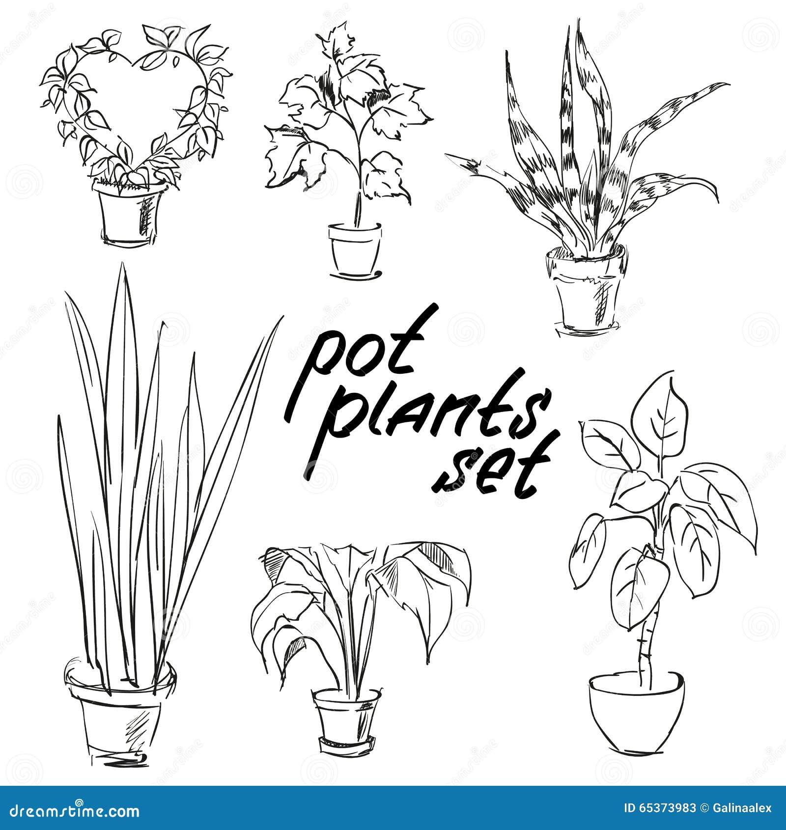 Pot Plants Set Hand Drawn Design Elements Stock Vector