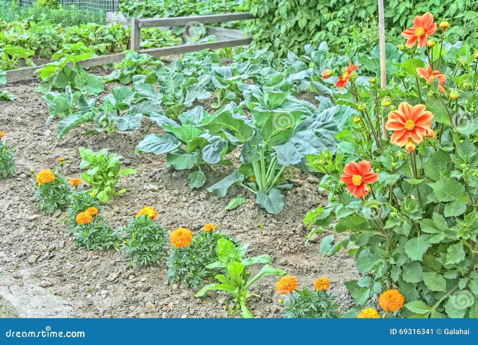 Potager décoratif avec des légumes et des fleurs