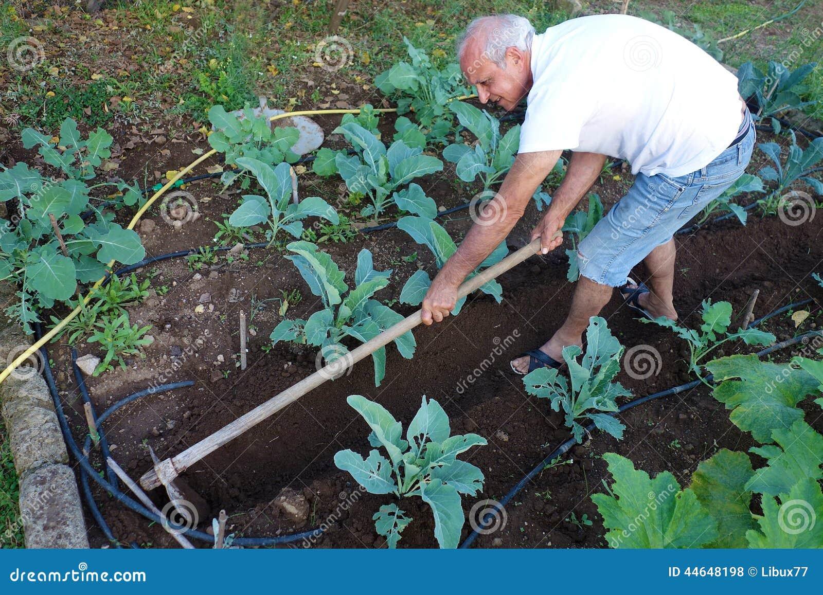 Potager de Working Hoeing Ground d agriculteur