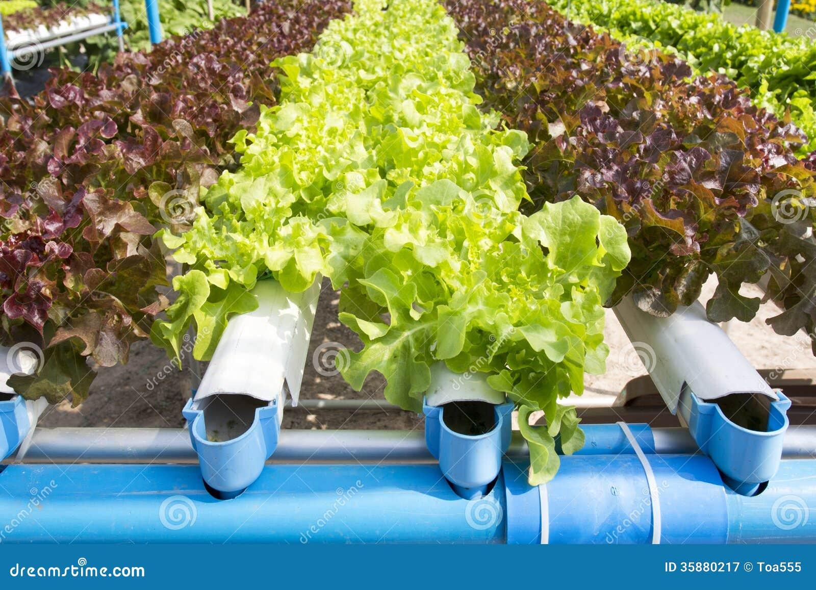Potager hydroponique photographie stock libre de droits for Jardin hydroponique
