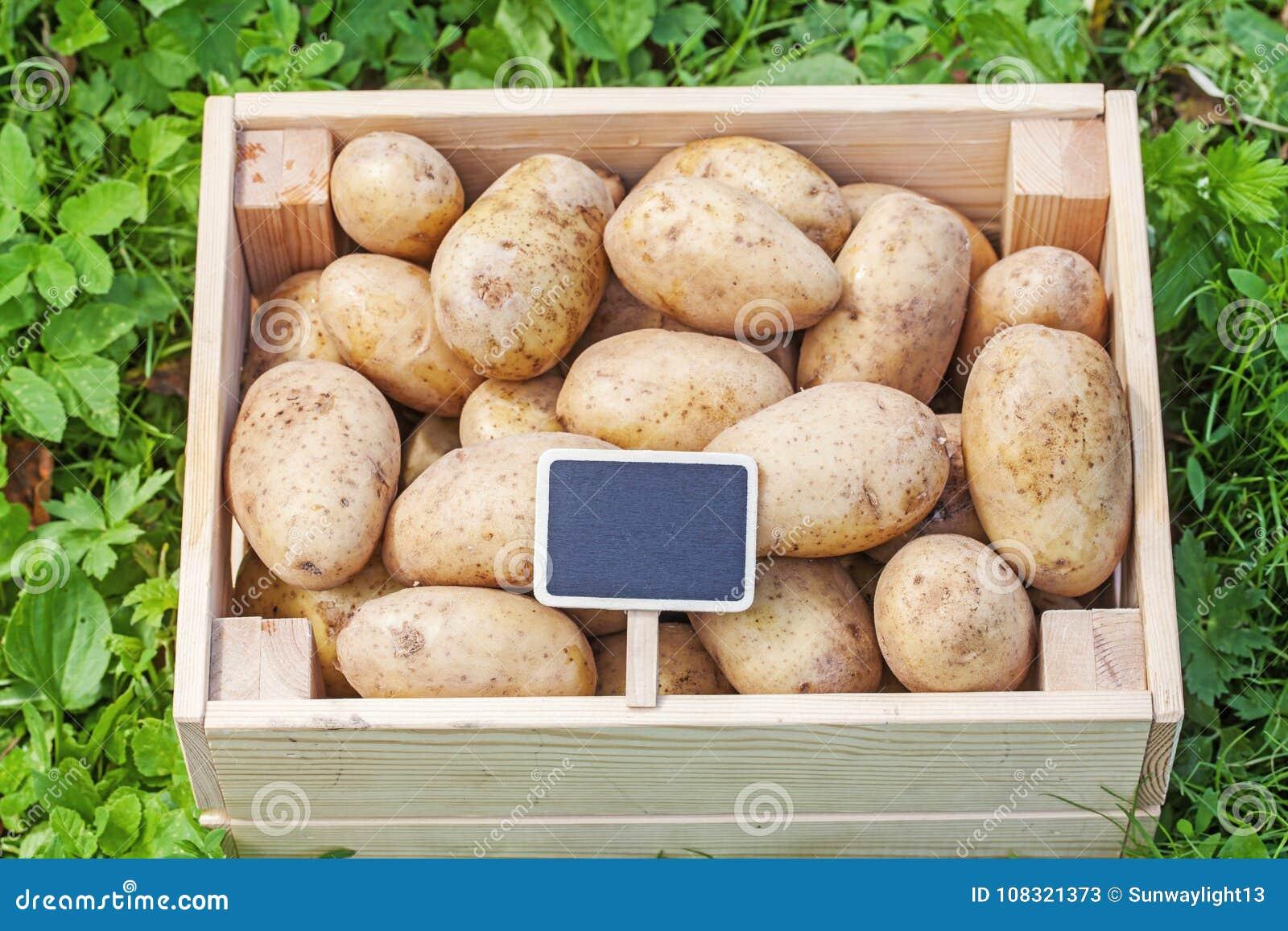 Potatis i den wood asken med