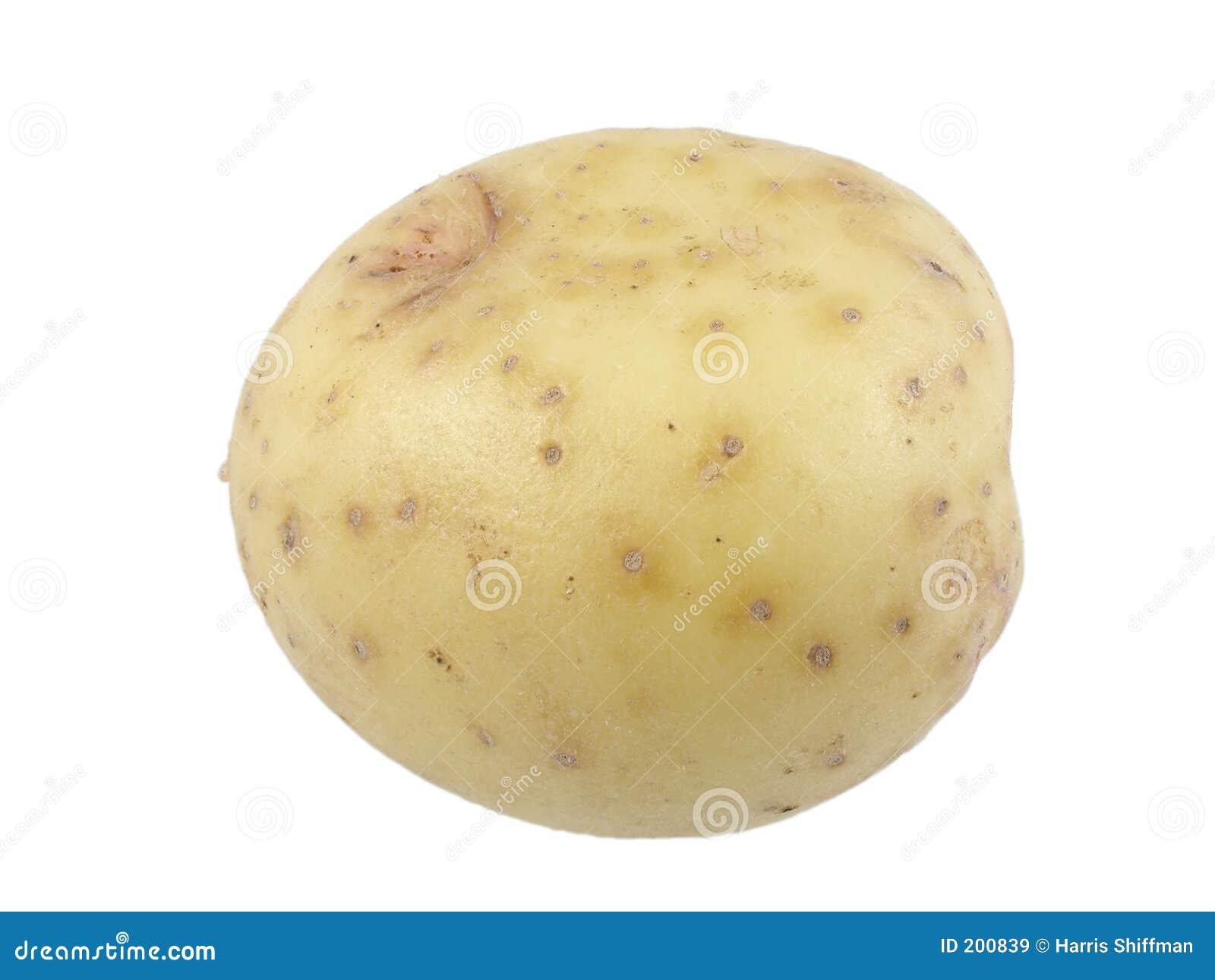 Potatiswhite