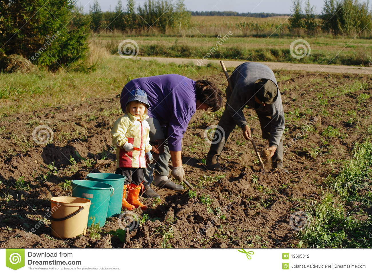 Potato digging in country side