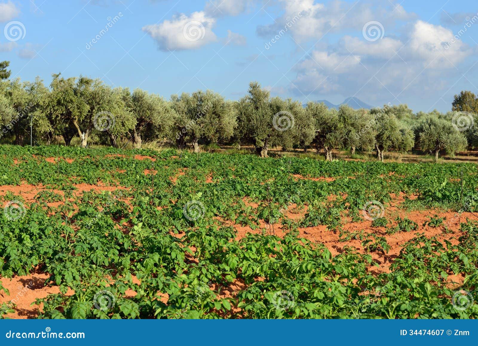 Greece Landscape Photo...