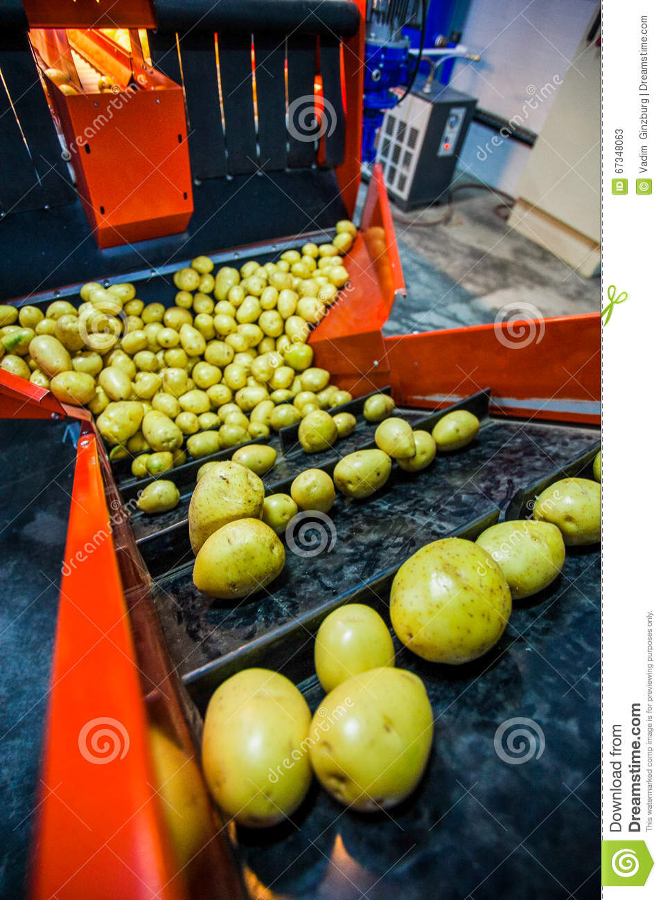Potato sorting, processing and packing factory