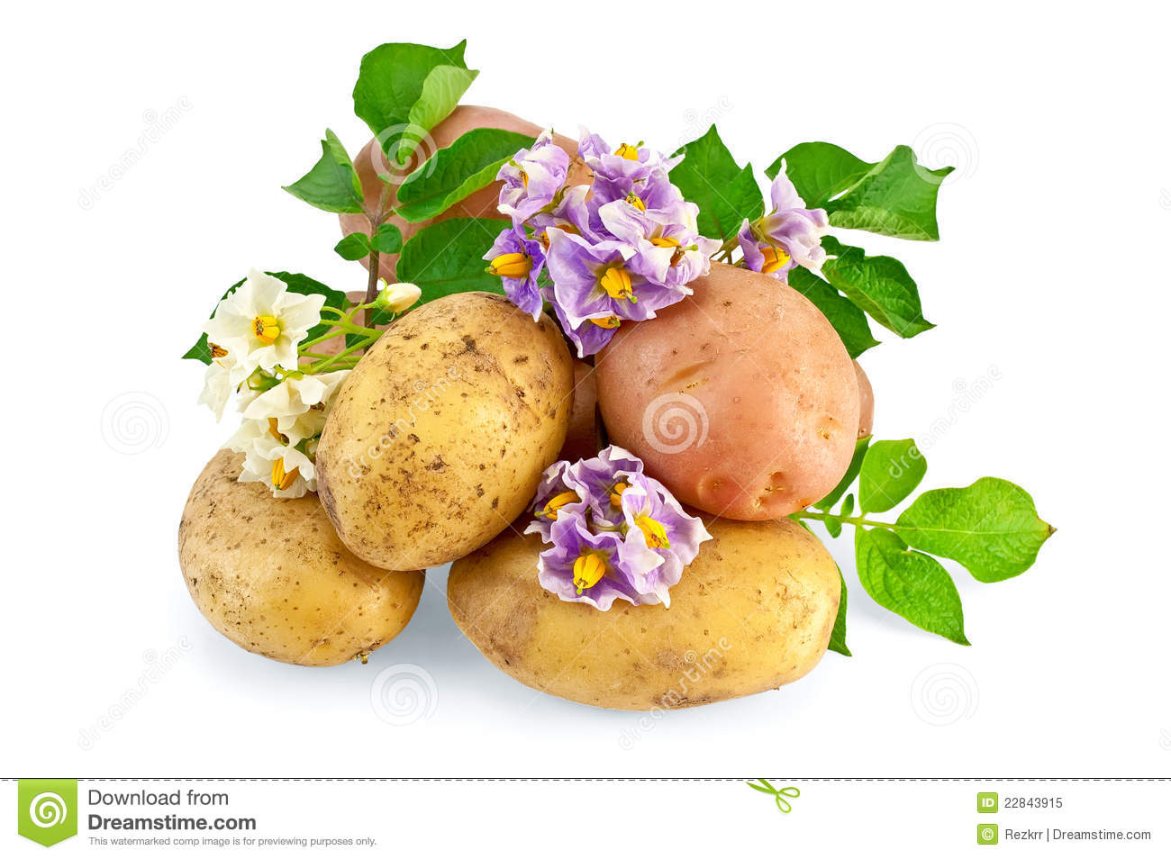 Potato yellow and pink with a flower