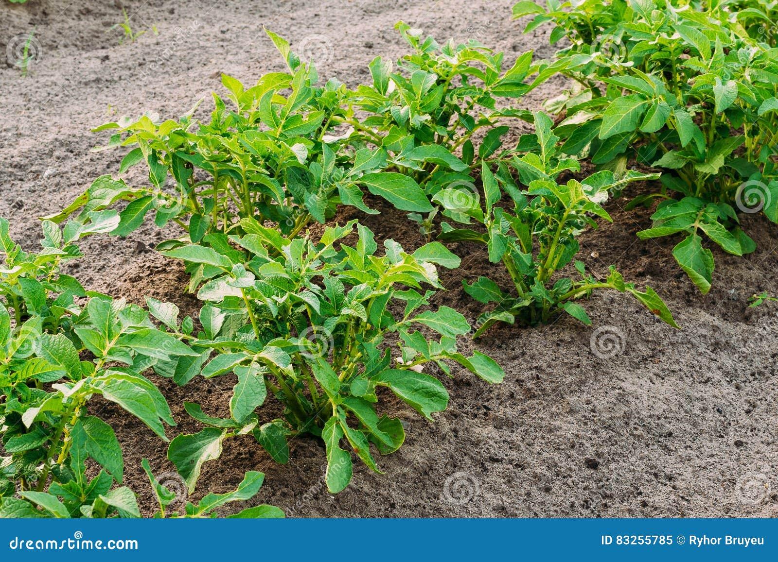Fertilizer For Raised Vegetable Garden Beds